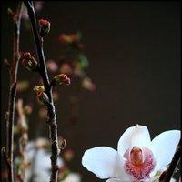 Ceremony, Reception, Flowers & Decor, white, pink, brown, Ceremony Flowers, Centerpieces, Flowers, Orchids, Blossom, Cherry, Atstudio