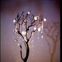 Flowers & Decor, white, Centerpieces, Lighting, Flowers, Roses, Centerpiece, Wedding, Tall, Hanging, Crystal, Manzanita, Crystals, Trees, Entwined design