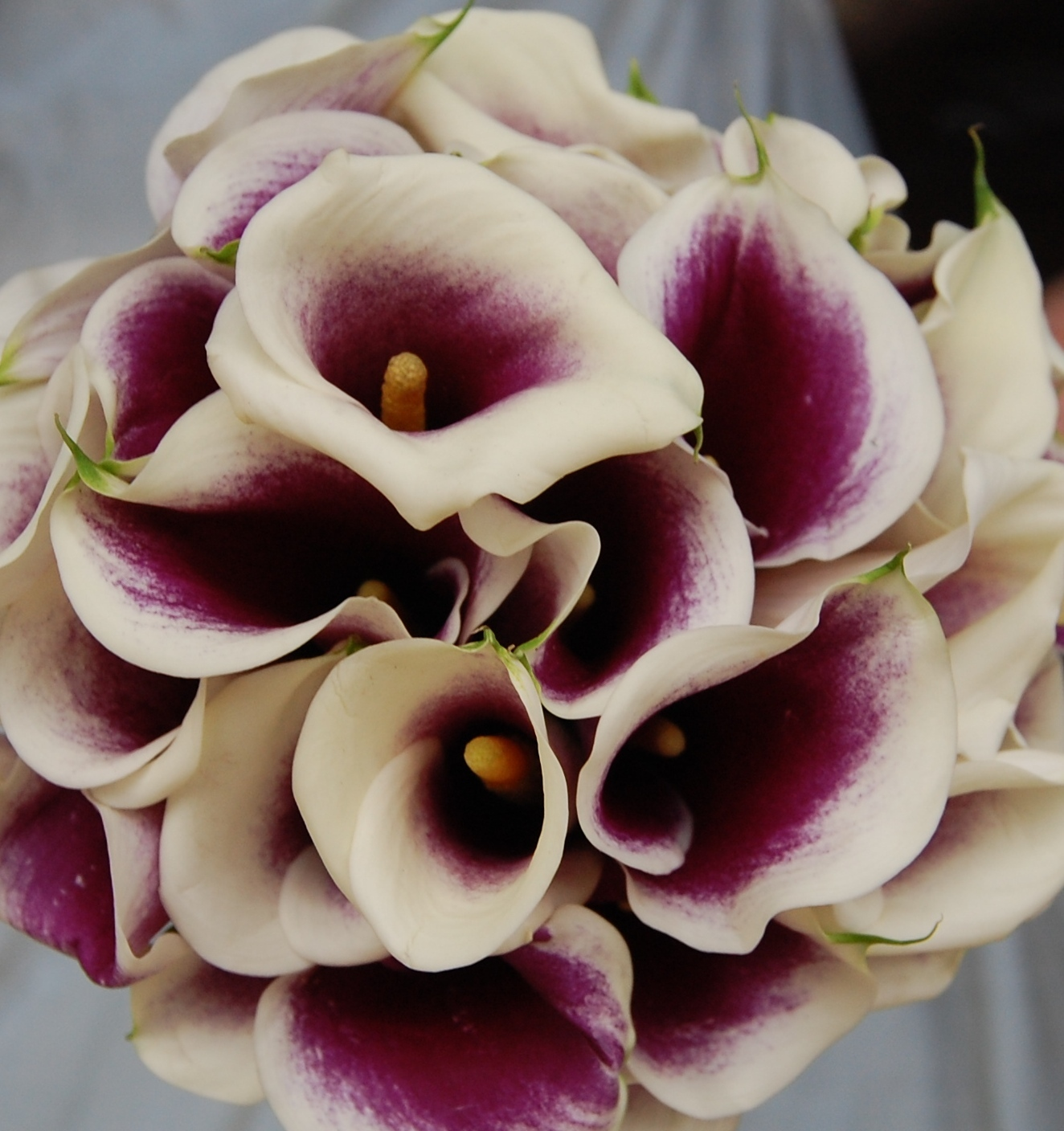 Flowers & Decor, Bridesmaids, Bridesmaids Dresses, Fashion, white, purple, Bride Bouquets, Bridesmaid Bouquets, Flowers, Bouquet, Calla, Bridal, And, Mini, Callas, Monday morning flowers, Picasso, Flower Wedding Dresses
