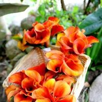 Ceremony, Flowers & Decor, orange, Ceremony Flowers, Flowers, Trueglimpse photography