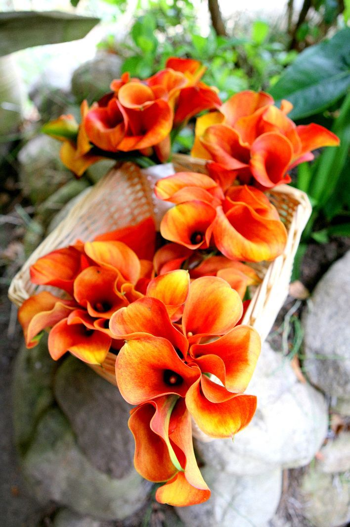 Ceremony, Flowers & Decor, orange, Ceremony Flowers, Flowers, Trueglimpse photography