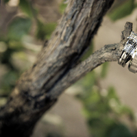 Jewelry, Rings, Branch, Earthy, Anibaldi studio wedding photography
