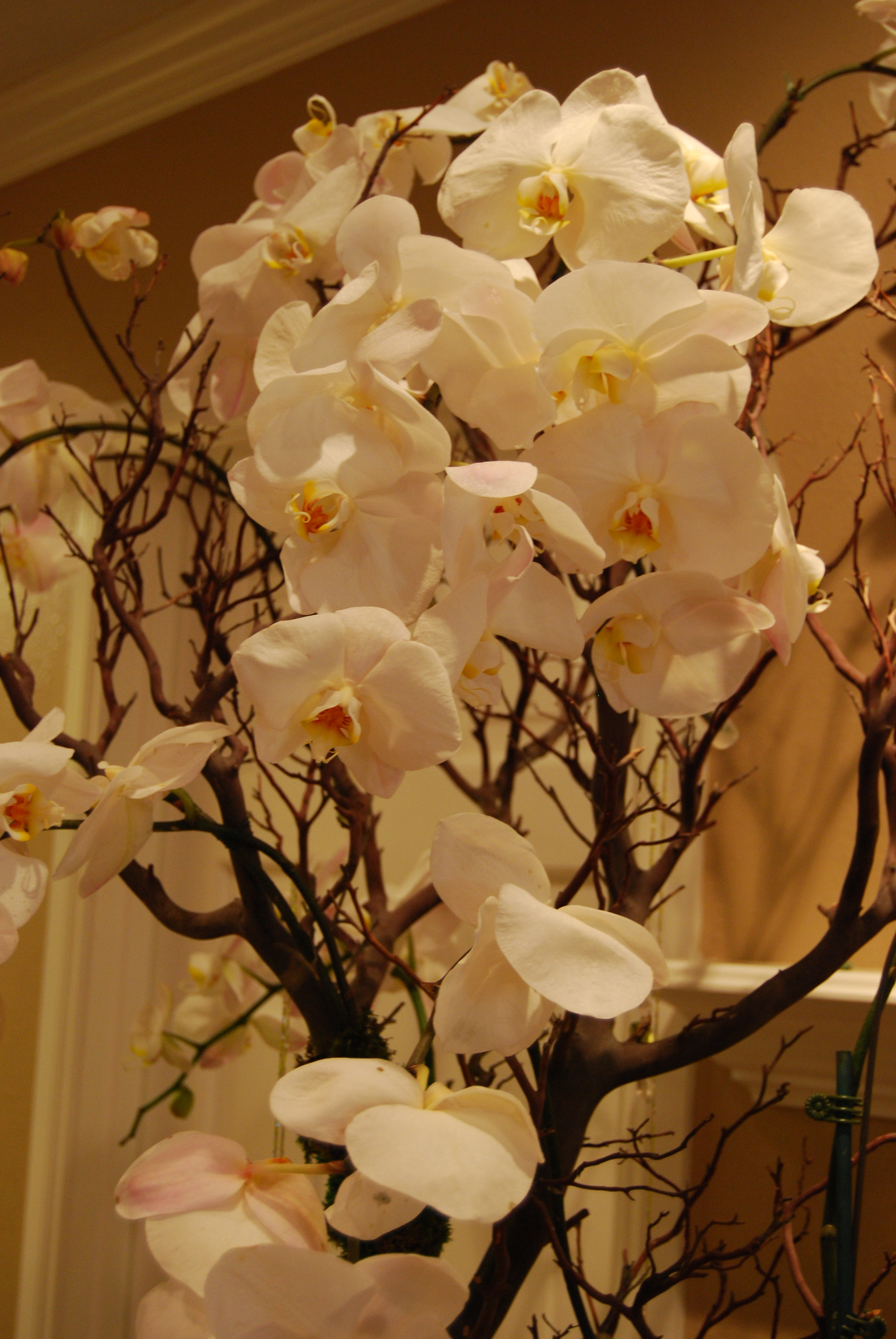 Reception, Flowers & Decor, white, brown, Centerpieces, Flowers, Centerpiece, Orchids, An elegant touch
