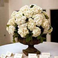 Reception, Flowers & Decor, white, brown, black, Flowers