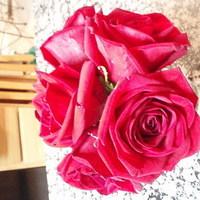 Flowers & Decor, pink, Flowers, Dandelion divas