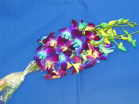 Flowers & Decor, purple, blue, Flowers, Blue dyed orchids