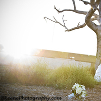 Flowers & Decor, white, blue, black, gold, Bride Bouquets, Bride, Flowers, Groom, And, Tree, B keene photography