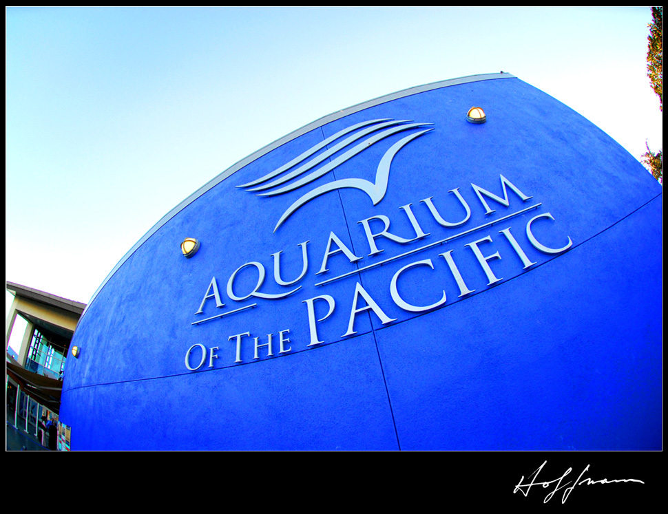 blue, Of, The, Aquarium, Pacific, Aquarium of the pacific