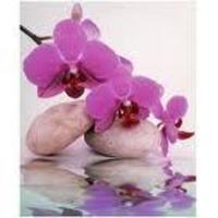 Flowers & Decor, pink, Centerpieces, Flowers, Centerpiece, Orchids, Rock, Vases, River, Clear, Cylinder