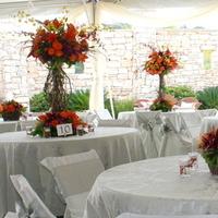 Reception, Flowers & Decor, orange, red, purple, Rustic, Rustic Wedding Flowers & Decor, Vine, Autumn, Topiary, Brenda abbott floral design