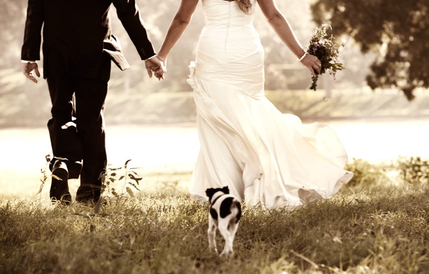 Ceremony, Flowers & Decor, Wedding Dresses, Fashion, dress, Portrait, Dog, Texas, Beautiful weddings, Ranch, Dallas, Wedding portrait, Modern life studios