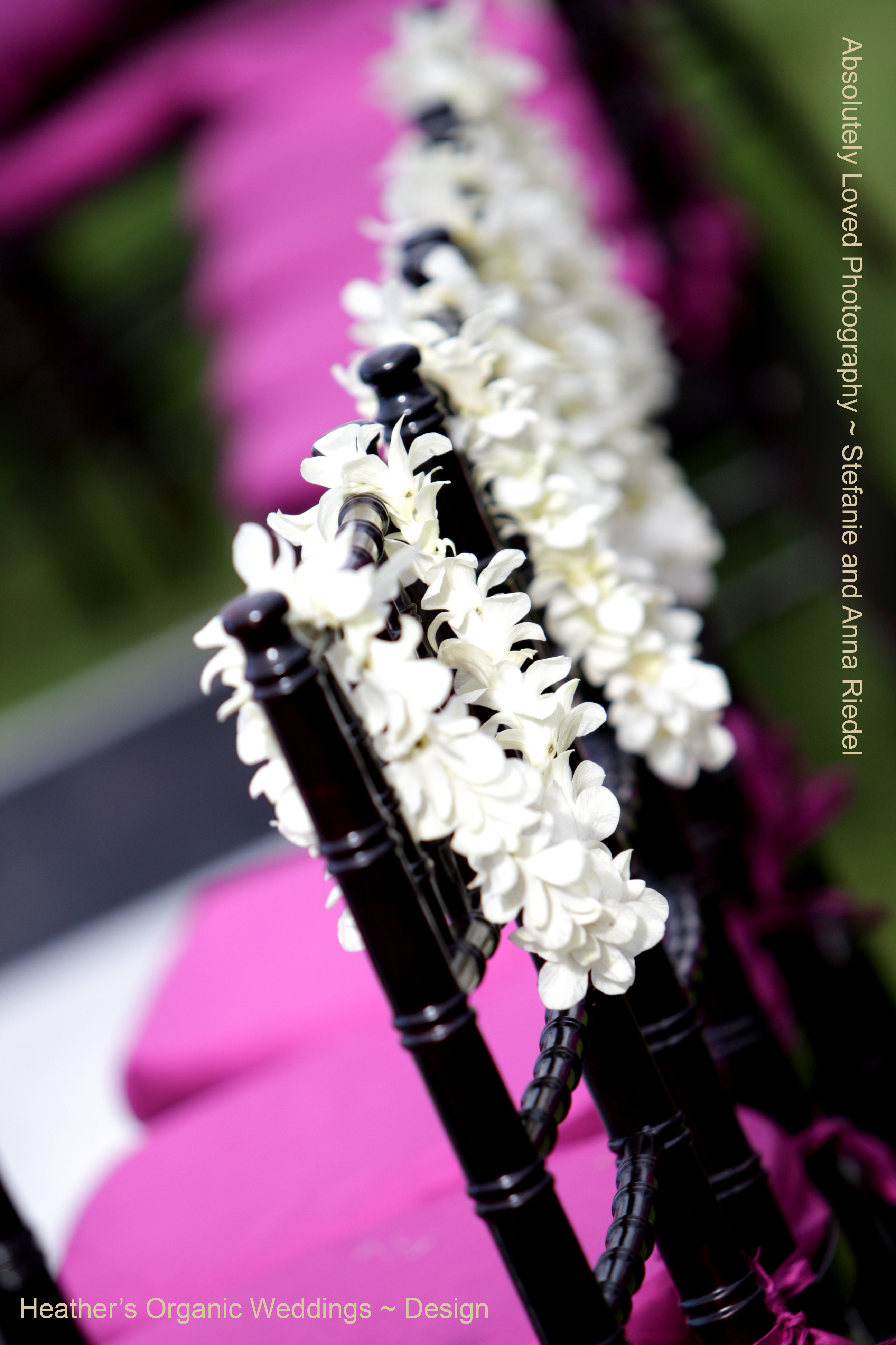 Ceremony, Reception, Flowers & Decor, Photography, purple, black, And, Anna, 808, Stefanie, Riedel, Wwwabsolutelylovedcom, Loved, Absolutely, 779, 1895