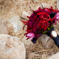Beauty, Flowers & Decor, red, black, Feathers, Bride Bouquets, Flowers, Bouquet, Cameo, Kristeen labrot events