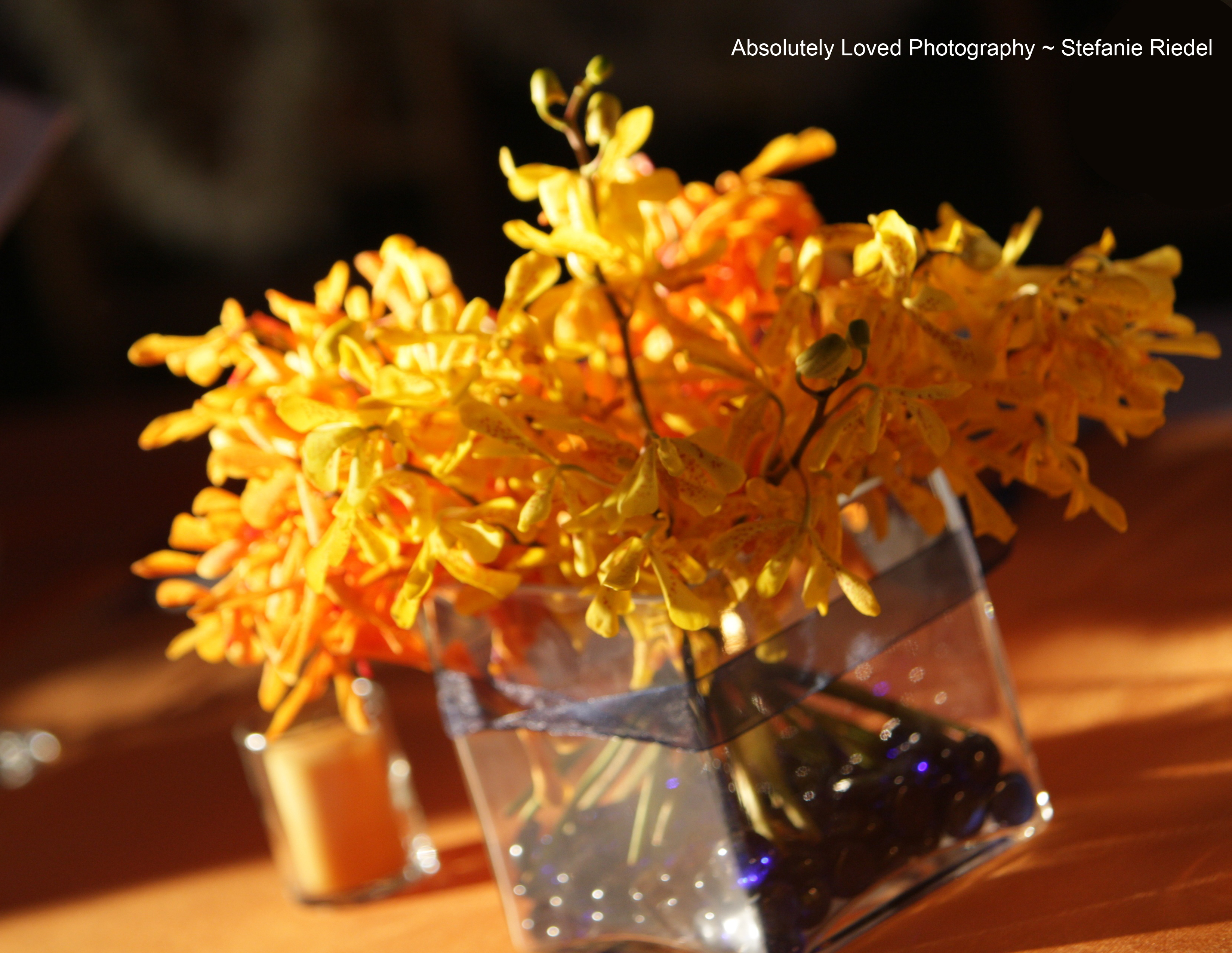 Ceremony, Reception, Flowers & Decor, Photography, yellow, orange, red, And, Anna, 808, Stefanie, Riedel, Wwwabsolutelylovedcom, Loved, Absolutely, 779, 1895