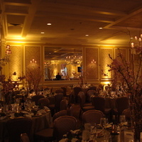 Reception, Flowers & Decor, yellow, gold, Lighting, llc, Uplighting, Amber, Ambient, Shindig lighting
