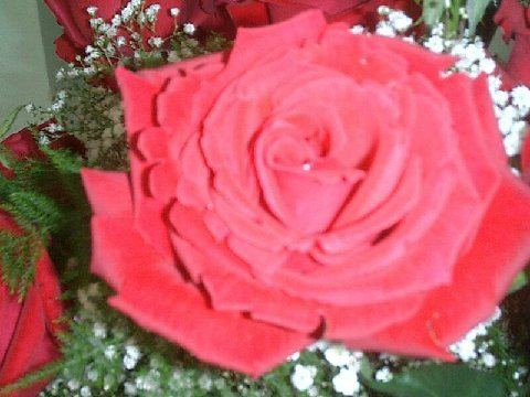 DIY, Flowers & Decor, red, Bride Bouquets, Flowers, Roses, Wedding, Brides, Do, It, Yourself, Farms, Perla, Perla farms