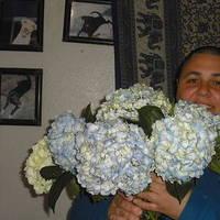 Reception, Flowers & Decor, Bridesmaids, Bridesmaids Dresses, Fashion, blue, Bridesmaid Bouquets, Flowers, Wedding, Hydrangeas, Farms, Perla, Perla farms, Flower Wedding Dresses
