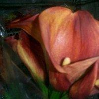 Flowers & Decor, Bridesmaids, Bridesmaids Dresses, Fashion, orange, Bridesmaid Bouquets, Flowers, Wedding, Callas, Mango, Farms, Perla, Perla farms, Fowers, Flower Wedding Dresses