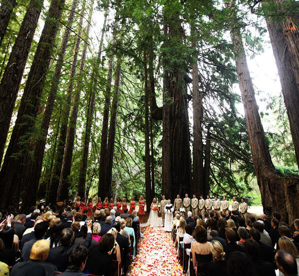 Ceremony, Flowers & Decor, Ceremony Flowers, Flowers, Flower, Petals, In, Redwoods