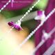 1375074012_small_thumb_2ce6c2a0fc9992e0c761d9754a9a5374