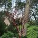 1375074057_small_thumb_a55a06d7eda4a011da25bbb4f2226f88