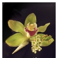 Flowers & Decor, green, Boutonnieres, Flowers, Orchid, Tropical, Ocean, Seashell, Boutonniere, Nikolai weddings and events