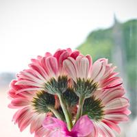 Flowers & Decor, Bridesmaids, Bridesmaids Dresses, Fashion, pink, Bride Bouquets, Bridesmaid Bouquets, Flowers, Bouquet, Daisy, Gerber, Seed floral couture, Flower Wedding Dresses