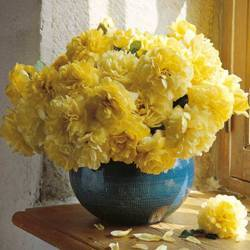 Flowers & Decor, yellow, Flowers, Fiftyflowerscom