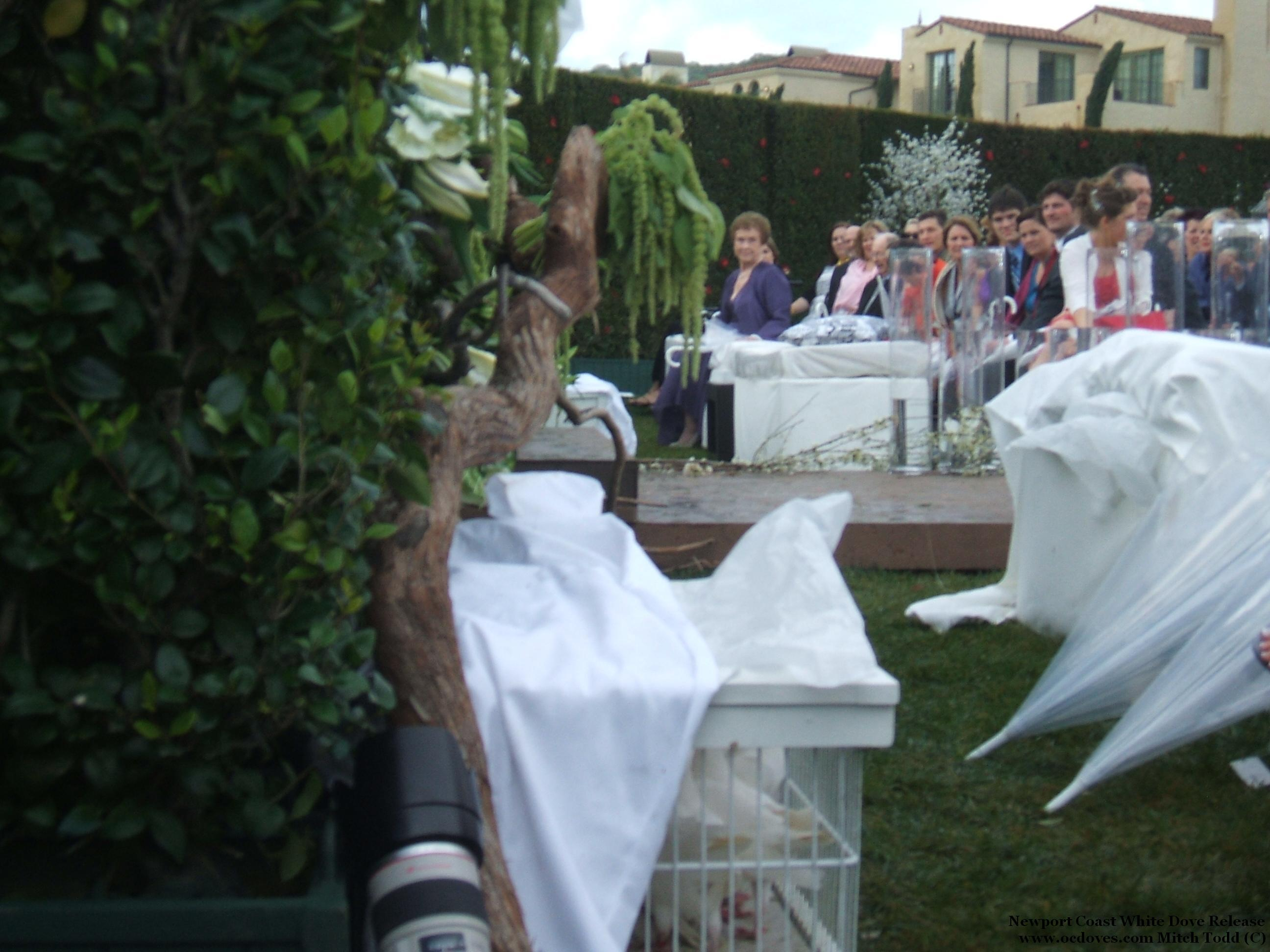 Wedding, Bachelor, The, Release, Dove, Newport coast white dove release llc, Abc