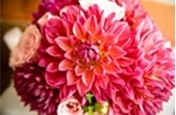 Flowers & Decor, pink, Flowers, Dahlias