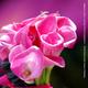 1375075993 small thumb 3567b51f228882a7d995e43dd3ea4df3