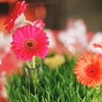 Reception, Flowers & Decor, orange, pink, green, Centerpieces, Flowers, Centerpiece