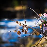 Flowers & Decor, pink, Bride Bouquets, Bride, Flowers, Bouquet, Wedding, Los angeles, Jason zalameda photography