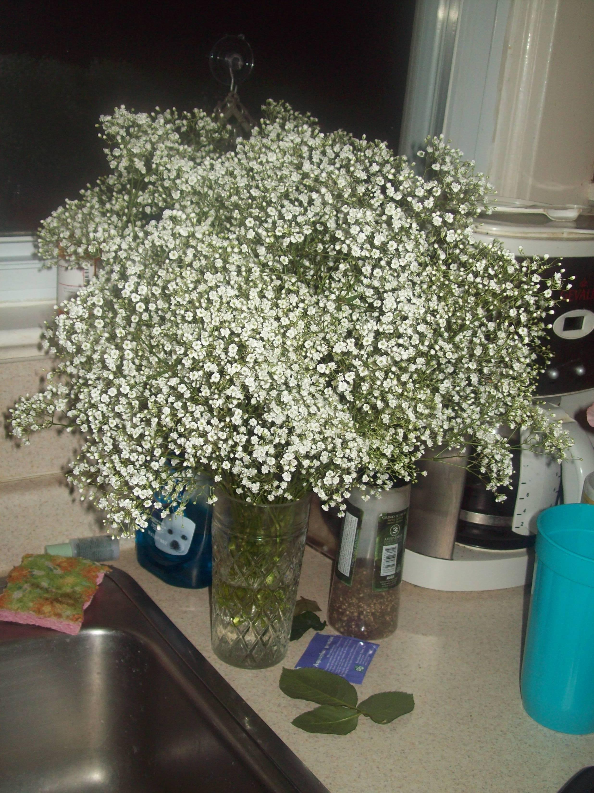 Flowers & Decor, white, Flowers, Babys, Breath