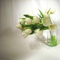 Flowers & Decor, white, green, Modern, Flowers, Modern Wedding Flowers & Decor, Of, Tulips, House, House of flowers