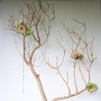 pink, Garden Wedding Flowers & Decor, Modern Wedding Flowers & Decor, Spring Wedding Flowers & Decor