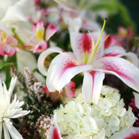 Flowers & Decor, white, pink, Centerpieces, Flowers, Centerpiece, Lily, Stargazer, Louisiana