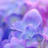 Inspiration, Flowers & Decor, pink, purple, blue, Flowers, Board