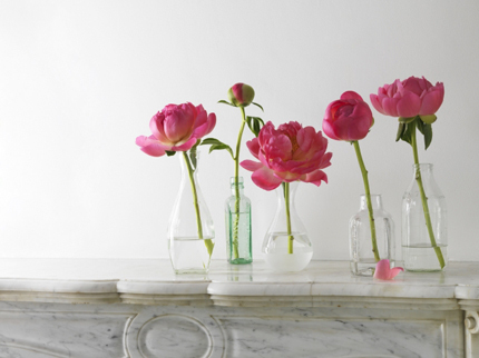 Reception, Flowers & Decor, Flowers, Peonies, Jars, Bottle