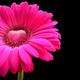 1375084554_small_thumb_46f20ee77ed9d0231875f363d9830192
