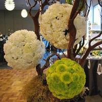 Flowers & Decor, white, green, brown, Flowers