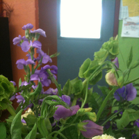 Flowers & Decor, white, purple, green, Flowers, Trial, Florist