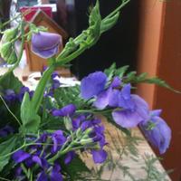 Flowers & Decor, white, purple, green, Flowers, Trial, Florist