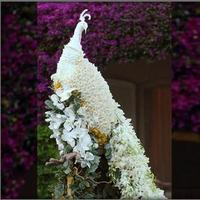 Flowers & Decor, white, Flowers, Flower, Peacock
