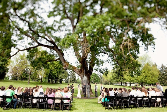 Ceremony, Flowers & Decor, Tree