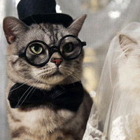Humor, Kitties