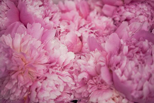 Flowers & Decor, pink, Flowers, Peonies