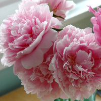 Flowers & Decor, pink, blue, Centerpieces, Flowers, Peonies, Simple, Ball, Jar
