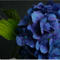 Flowers & Decor, blue, Centerpieces, Flowers, Dark, Indigo