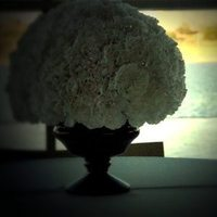 Flowers & Decor, white, black, Centerpieces, Flowers, Centerpiece, Vase, Urn